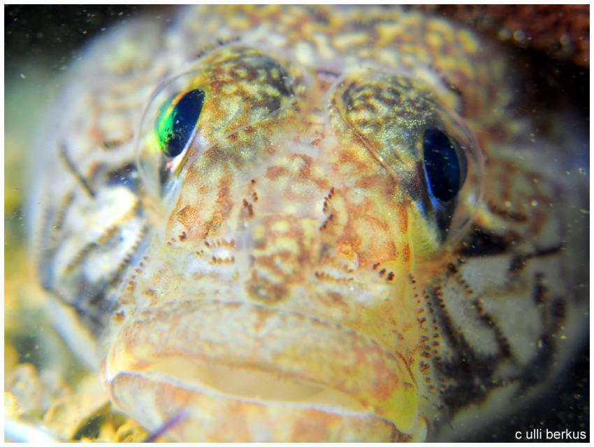Ich schau Dir in die Augen...., Mihuric Diving Center, Selce, Kroatien