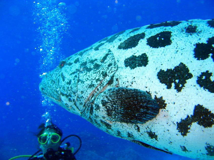 Cod Hole, Cod Hole,Great Barrier Reef,Australien