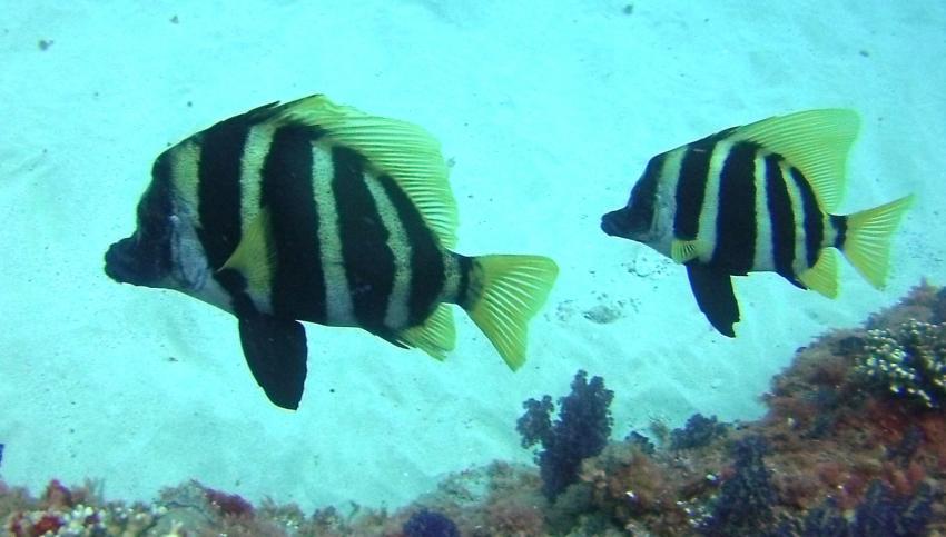 Pro Dive, Lord Howe Island, Australien
