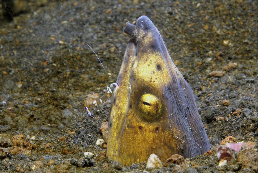 Diverse Tauchplätze, Unterkunft Black Sand Dive Retreat, Sulawesi