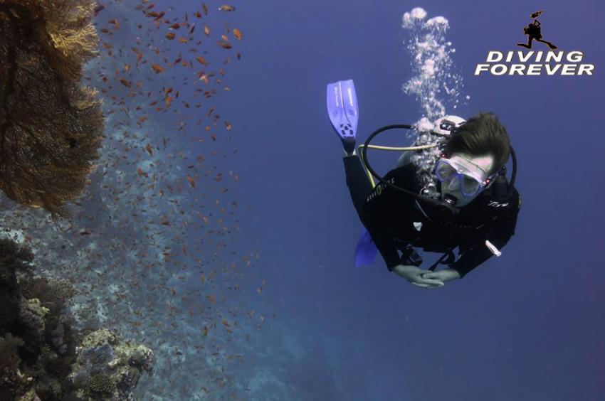 hurghada tauchen www.divingforever.com, hurghada tauchen www.divingforever.com, Diving Forever Hurghada, Ägypten, Hurghada