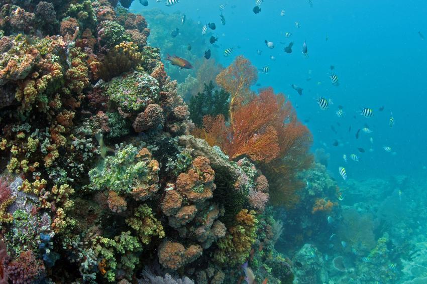 Pulau(= Insel) Sahaung (Bangka Archipel), Pulau Sahaung,Indonesien,Korallen