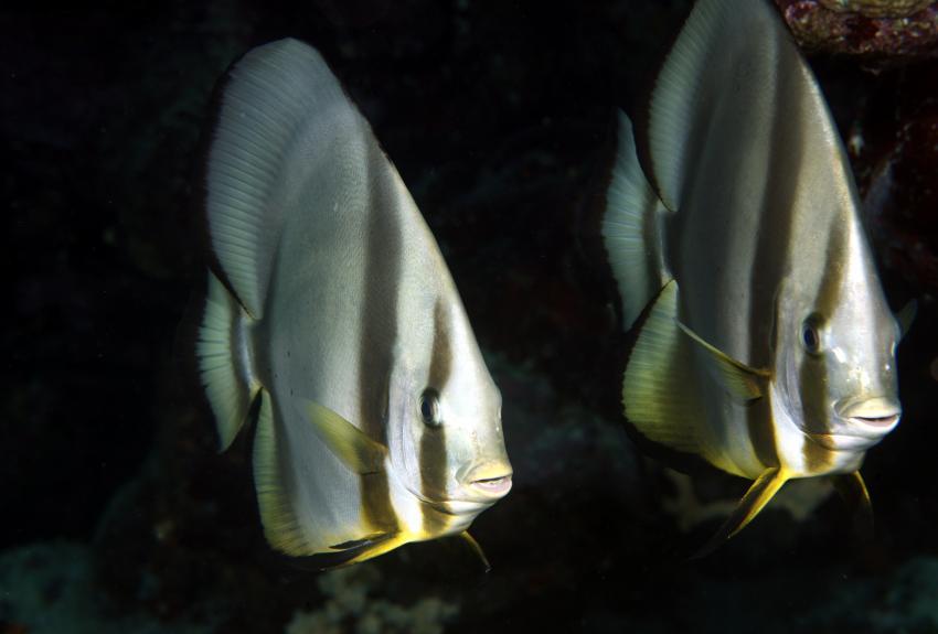 St. John´s Reef