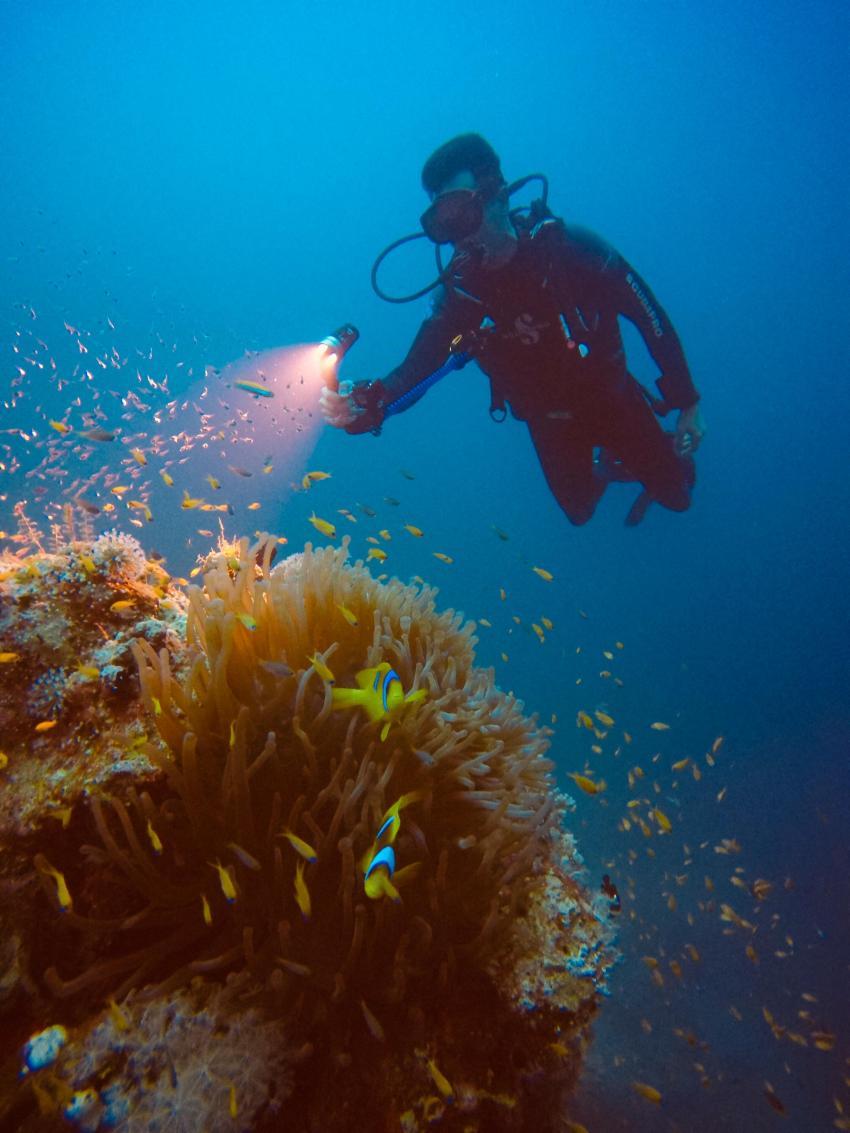 Scuba World Divers SuneoClub Reef Marsa_7, Tauchen Ägypten Marsa Alam, Scuba World Divers, SuneoClub Reef Marsa, Port Ghalib, Ägypten, El Quseir bis Port Ghalib
