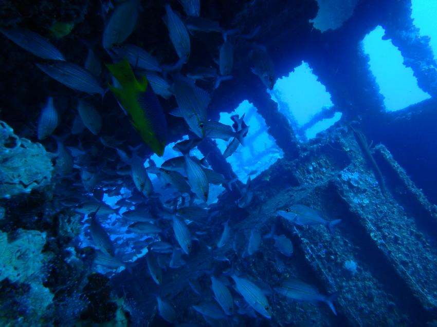 Underwater-Emotions, Boca Chica, Dominikanische Republik
