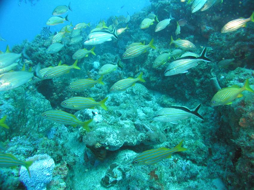 Riviera Beach - Reef ´Juno Ledge´, Riviera Beach,FL,Florida,USA