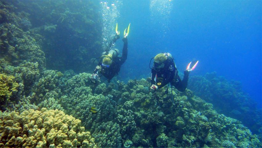 Scuba_World_Divers_Marsa_Alam_5, Tauchen in Marsa Alam, Scuba World Divers Marsa Alam, Lagoon View Resort, Ägypten, El Quseir bis Port Ghalib