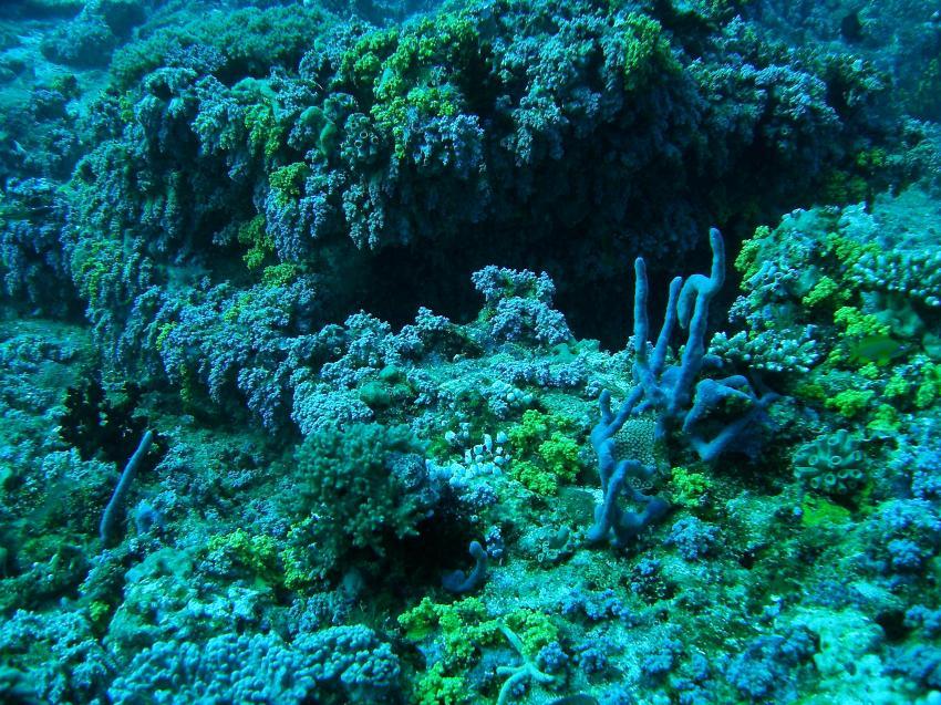 Ari Atoll - Seventh Heaven, Ari Atoll,Malediven