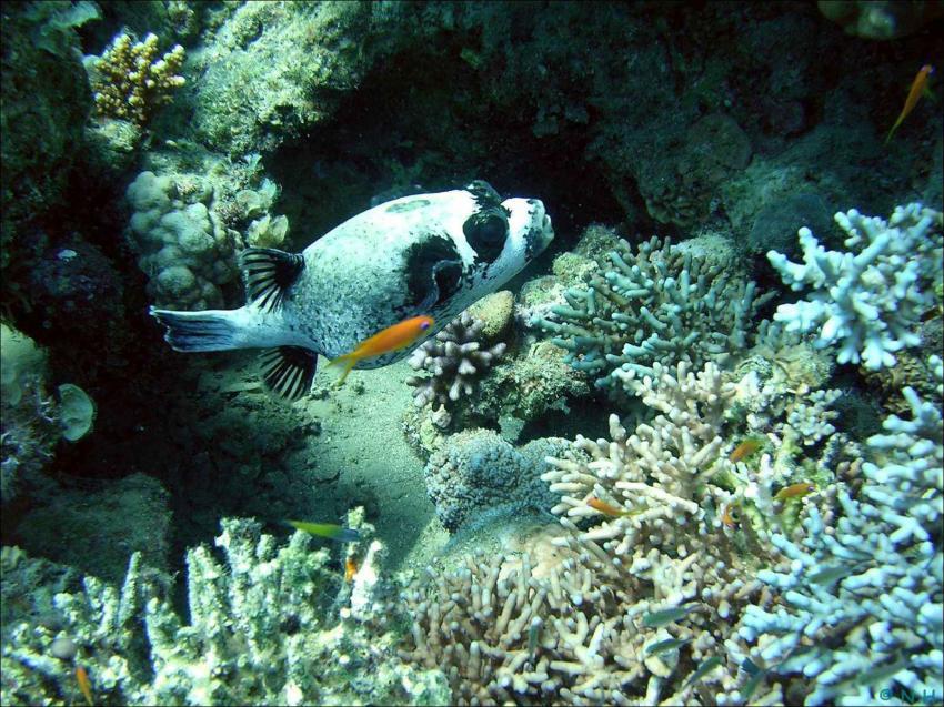 Golf von Aqaba bei Dahab, Golf von Aqaba bei Dahab,Ägypten