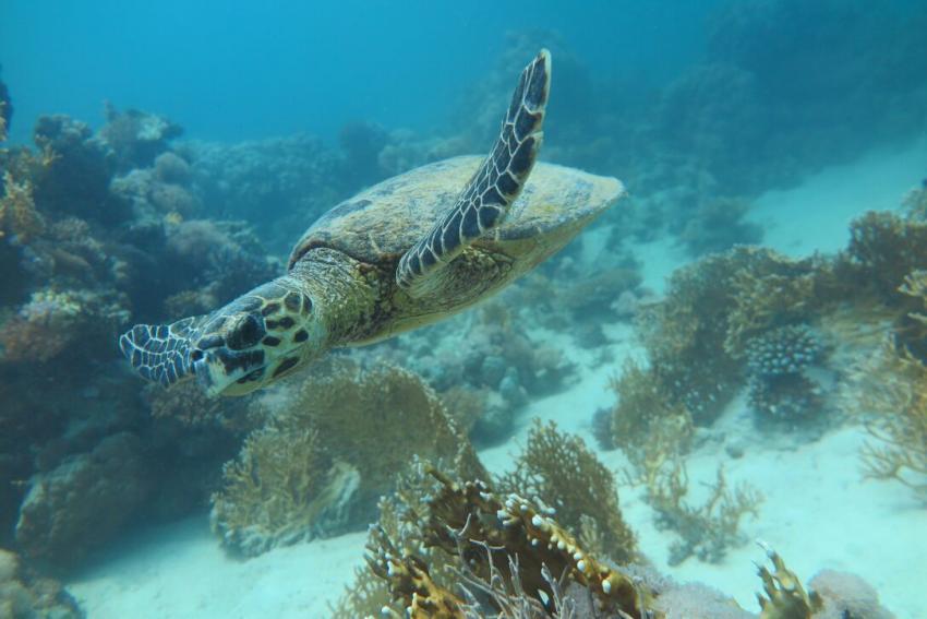 SWDS6, Tauchen in El Quseir, Scuba World Divers El Quseir, SENTIDO Oriental Dream Resort, Ägypten, El Quseir bis Port Ghalib