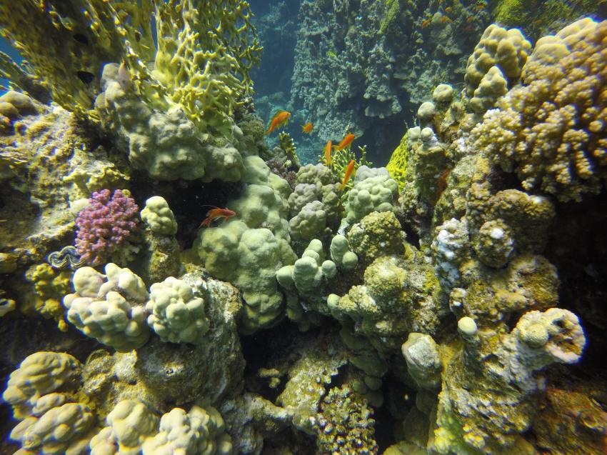Orca Dive Club Concorde Moreen Housereef 2, ORCA Dive Club Moreen Beach, Ägypten, Marsa Alam und südlich