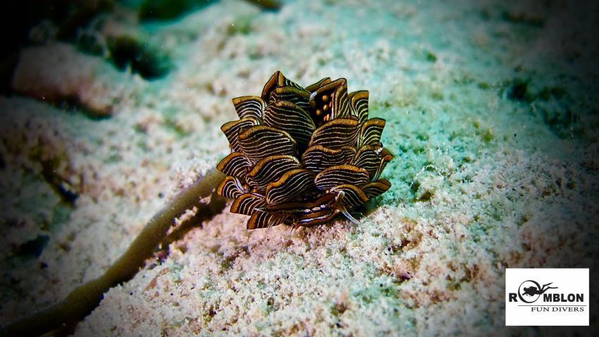 Romblon Fun Divers & Inn, Philippinen