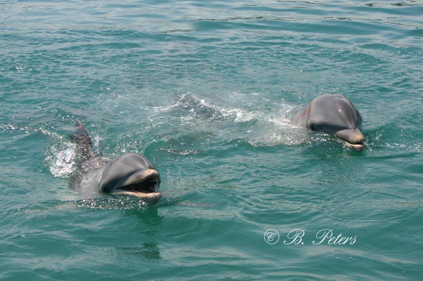 Bahia Naranjo, Bahia Naranjo,Kuba,Delphin,Delfin,Oberfläsche,schauen