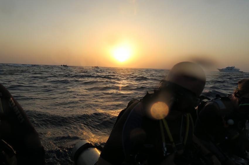 Early-Morning am Elphinstone , Hany Dolphin Blue, Ägypten, Safaga