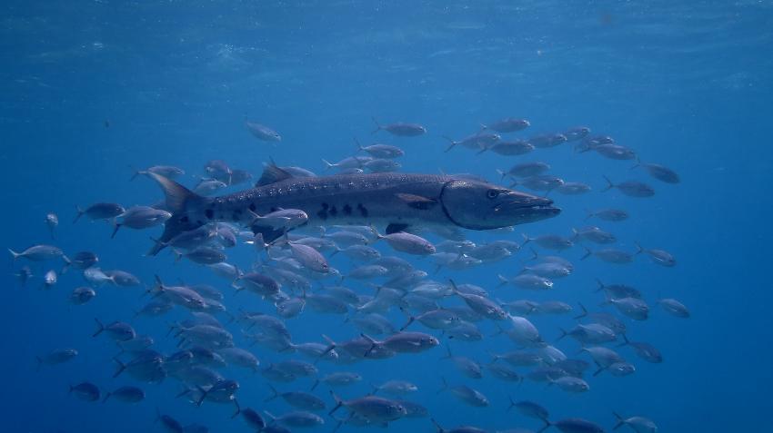 Bonaire diverse Tauchplätze