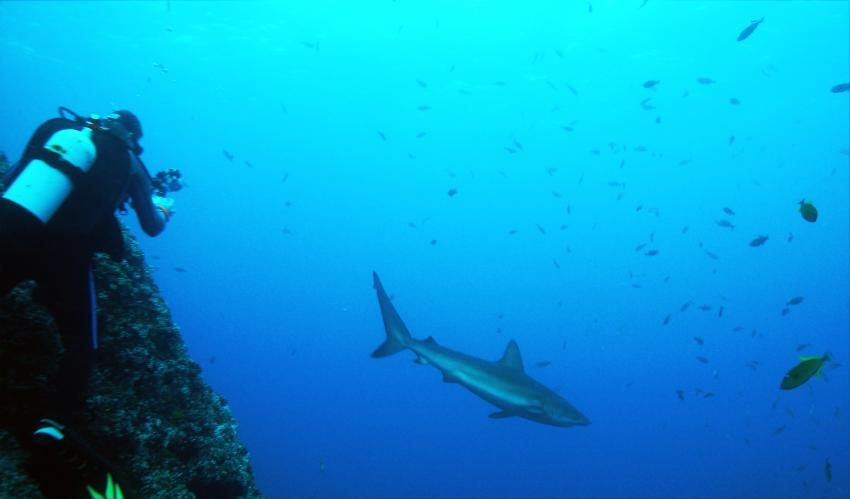 soccoro, Socorro Islands,Mexiko
