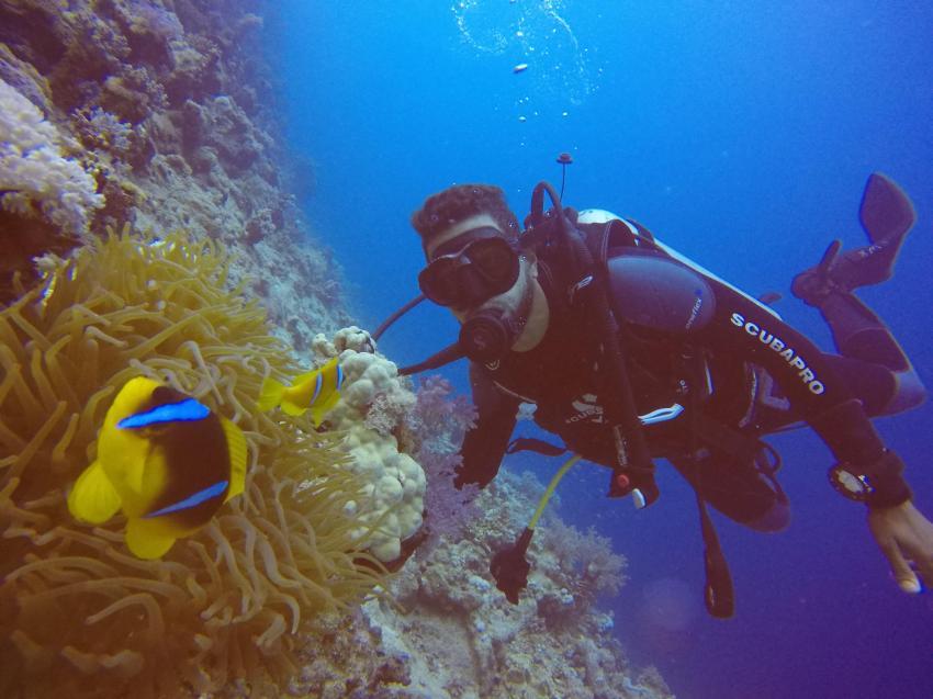 Scuba World Divers SuneoClub Reef Marsa_3, Tauchen Ägypten Marsa Alam, Scuba World Divers, SuneoClub Reef Marsa, Port Ghalib, Ägypten, El Quseir bis Port Ghalib