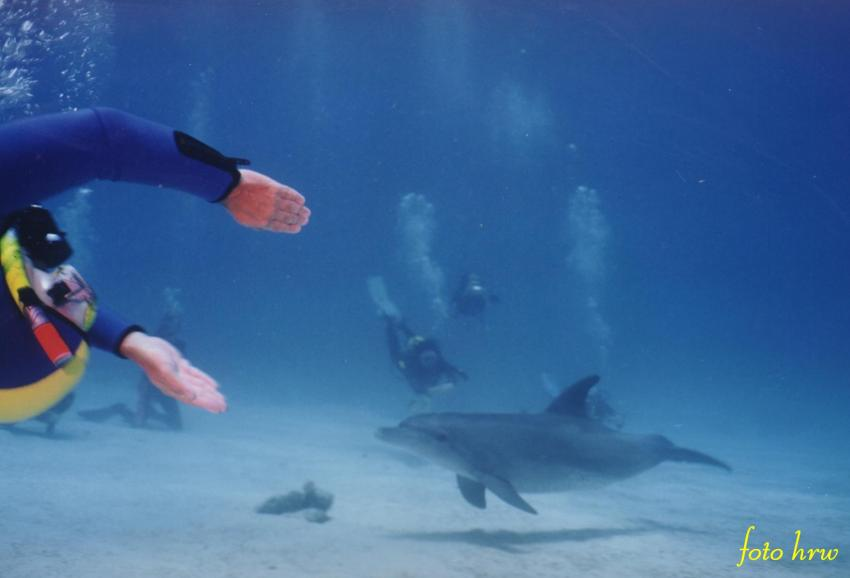 Hurghada - Fanus West, Fanus West,Hurghada,Ägypten,Delphin