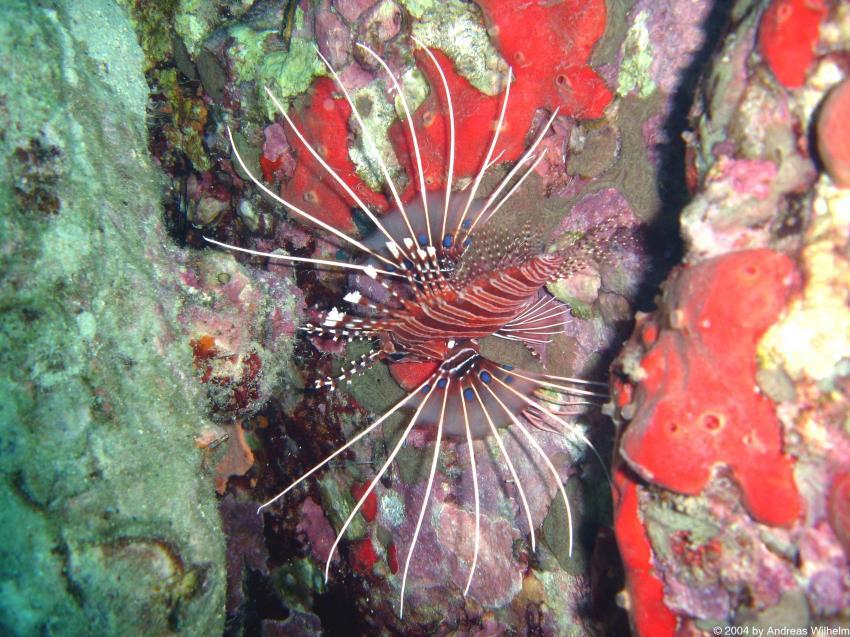 Racha Yai - Bay No. 3, Racha Yai - Bay No. 3,Thailand
