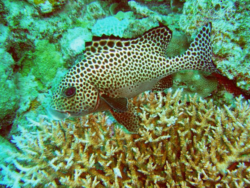 Great Barrier Reef / Coral Sea, Great Barrier Reef / Coral Sea,Australien