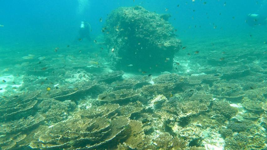 Sichtverhältnisse - bei unserem Besuch wohl überdurchschnittlich gut, Extra Divers - Qantab, Oman, Oman