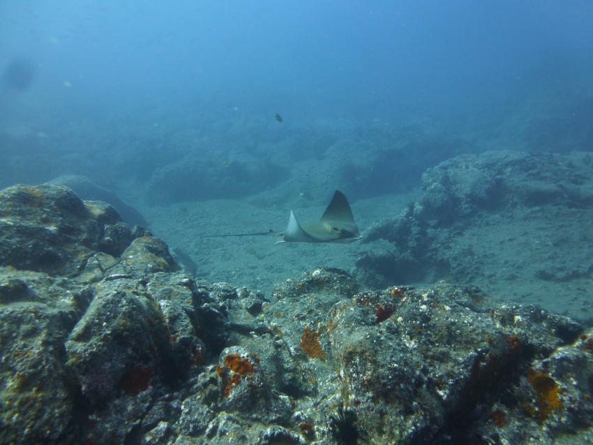 Rochengarantie mit DIVERIA, Diveria Diving Center, Alcala Teneriffa, Spanien, Kanarische Inseln