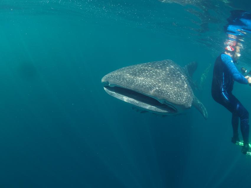 (c) Dave Reed, Triton Bay Divers, Indonesien, Allgemein
