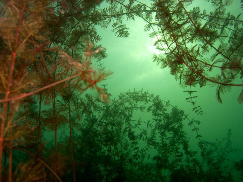 Kalkbruchsee Lüneburg, Kalkbruchsee Lüneburg,Niedersachsen,Deutschland