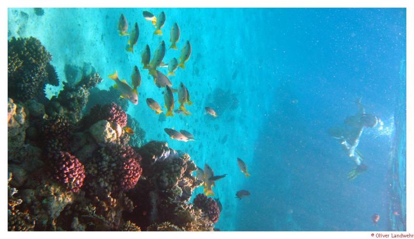 El Quadim (Bucht Mövenpick Resort), El Quadim,Ägypten