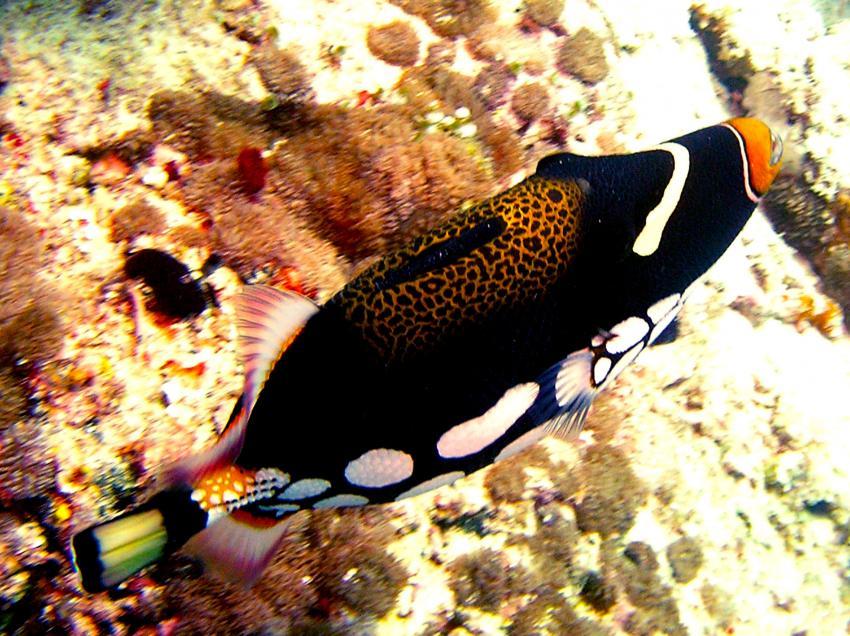 Safari, Ari Atoll,Malediven