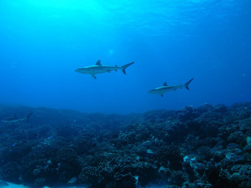 Fakarava, Fakarava,Französisch-Polynesien,Haie,Riff,Entfernung,blau