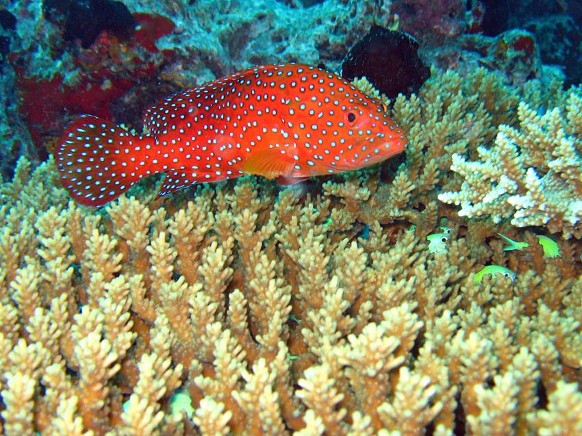 Eriyadu Nord-Male-Atoll
