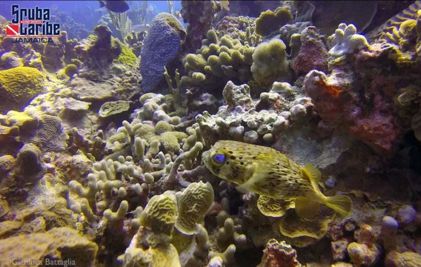 ScubaCaribe RIU Ocho Rios - Unterwasser, Scubacaribe, Ocho Rios, Hotel RIU, Jamaika