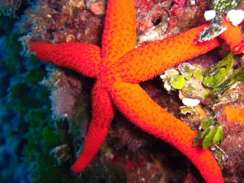 Cap La Mola, Cap La Mola,Spanien,Seestern