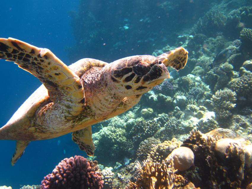 Marsa Alam, Dugong, Schildkröten & co