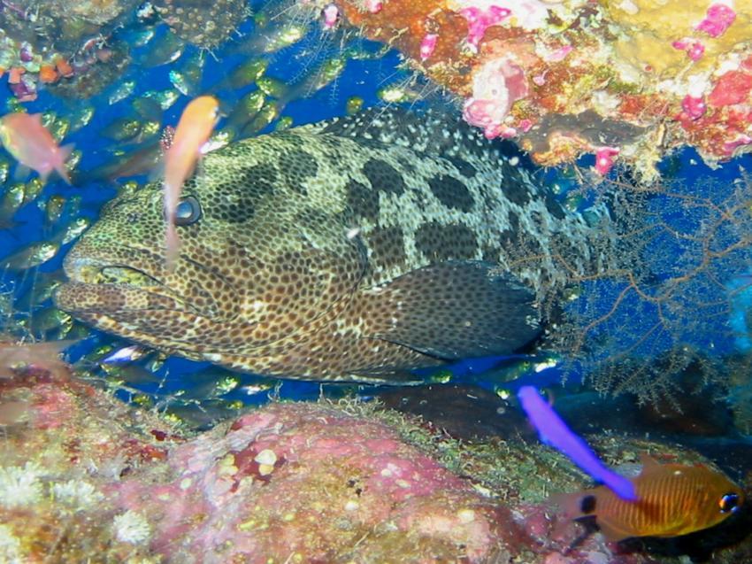 Sharm el Sheikh - Sharks Bay