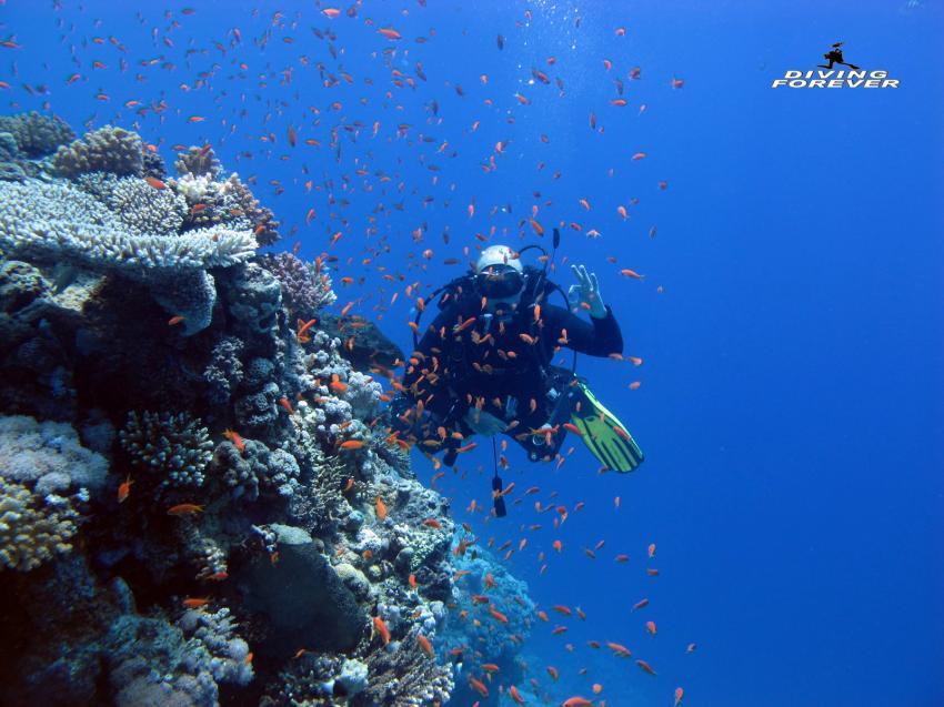 Tauchen in Hurghada, Tauchen Hurghada, Diving Forever Hurghada, Ägypten, Hurghada