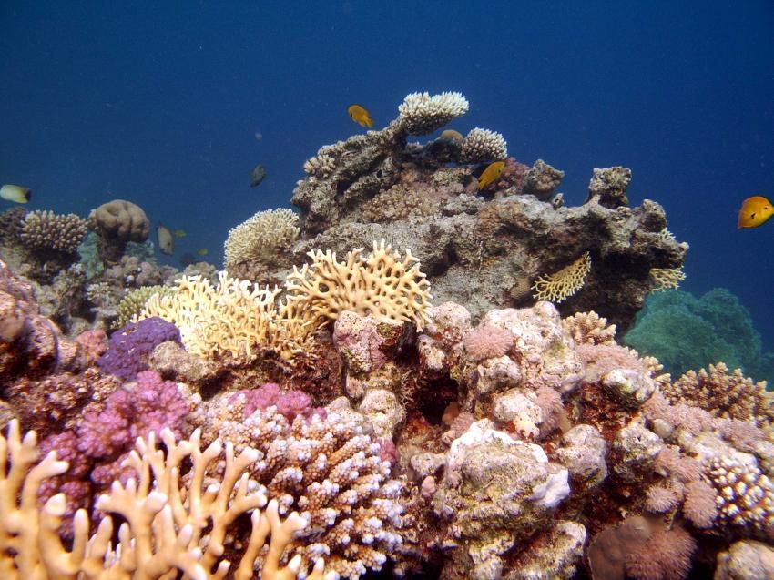 Safaga - Coral Garden