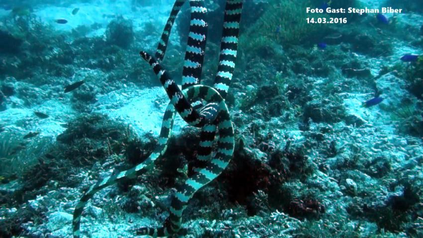 Tauchsafari Philippinen, Snake Island, Bernds Tauchsafaris, Bohol, Philippinen