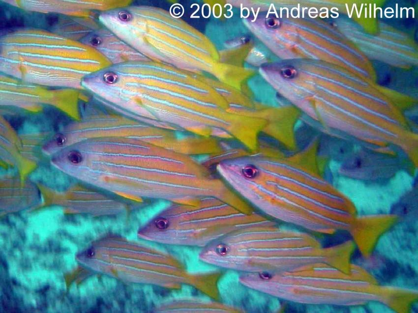 Maa Giri (Nord Male Atoll), Maa Giri,Nord Male Atoll,Malediven
