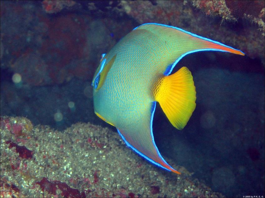 Insel Saba - Karibik, Saba,Niederländische Antillen