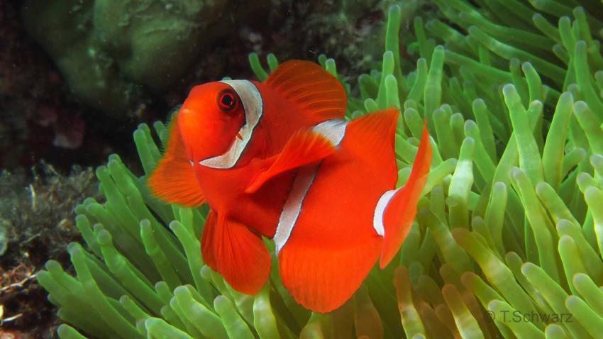 Entlang der Manado-Bucht (mit Tasik Divers), Manado-Bucht Festland,Indonesien