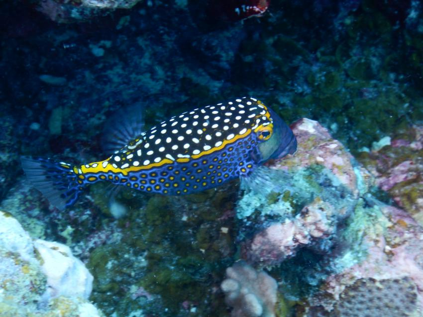 Dive Tribe Mauritius, Mauritius