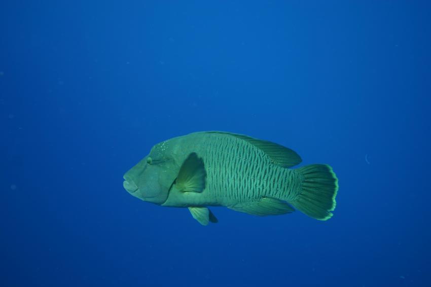 Elphinstone Reef - Fotos von 2 Tauchgängen