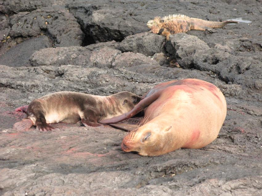Galapagos, Galapagos,Ecuador