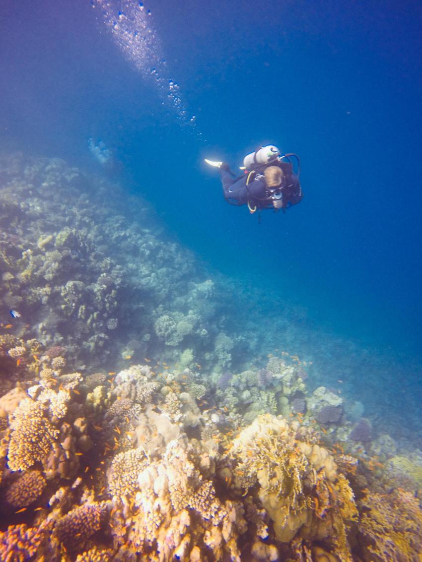 Scuba World Divers SuneoClub Reef Marsa_8, Tauchen Ägypten Marsa Alam, Scuba World Divers, SuneoClub Reef Marsa, Port Ghalib, Ägypten, El Quseir bis Port Ghalib