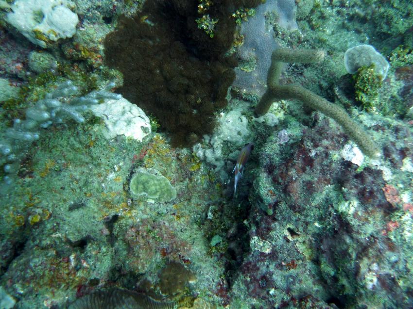 Coral Garden, Coral Garden,Juan Dolio,Dominikanische Republik