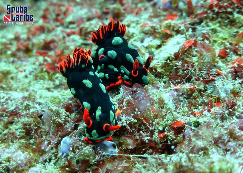 Unterwasser mit ScubaCaribe, ScubaCaribe Le Morne - RIU Hotels, Mauritius