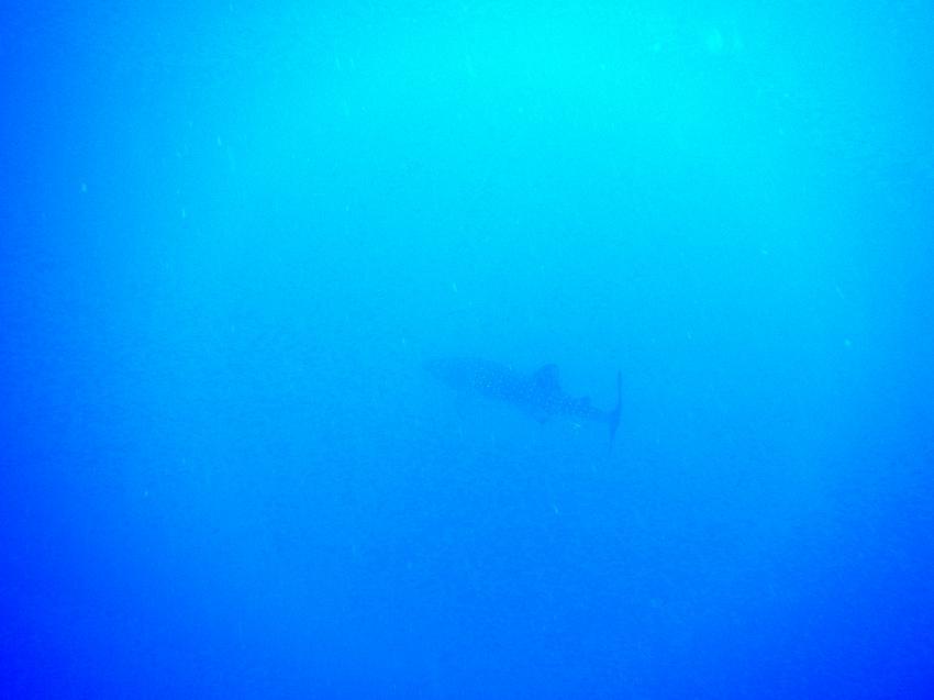 Diving Ocean - Hotel Prima Life Resort, Ägypten, Safaga