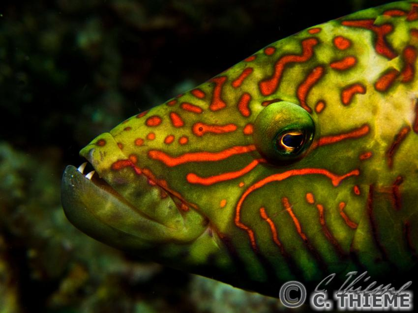 Unterwasserfotos Anilao, Anilao,Philippinen